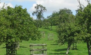 Traditional Orchard in Worcestershire