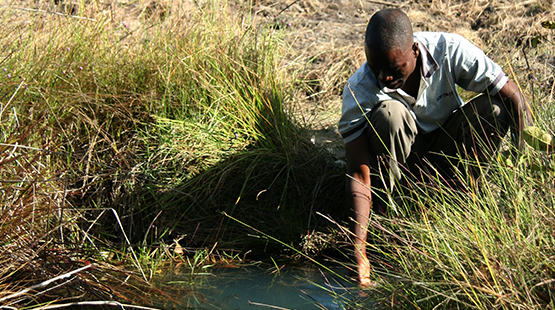 sto_agriculture_africa_555x310