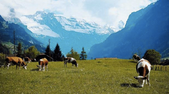 sto_images_salek_valley_555x310