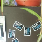 spider plants2